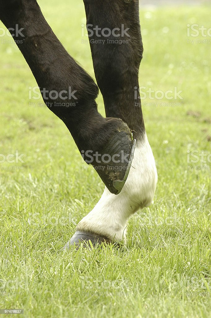 Horse leg royalty-free stock photo