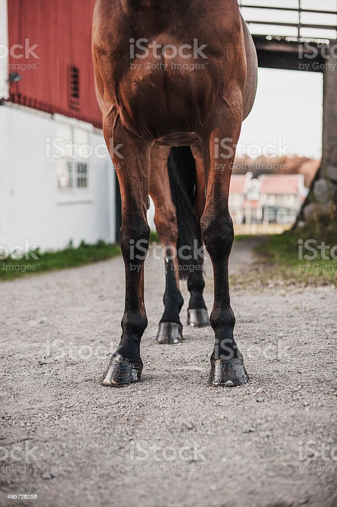 Horse legs and hoofs stock photo