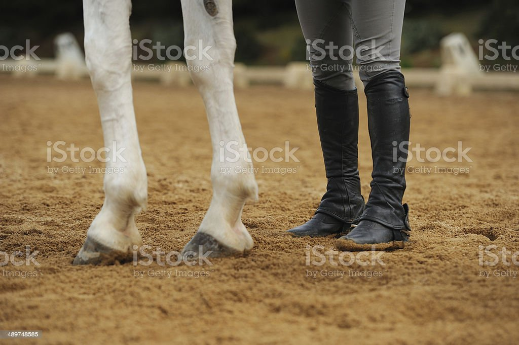 Horse legs and human legs stock photo