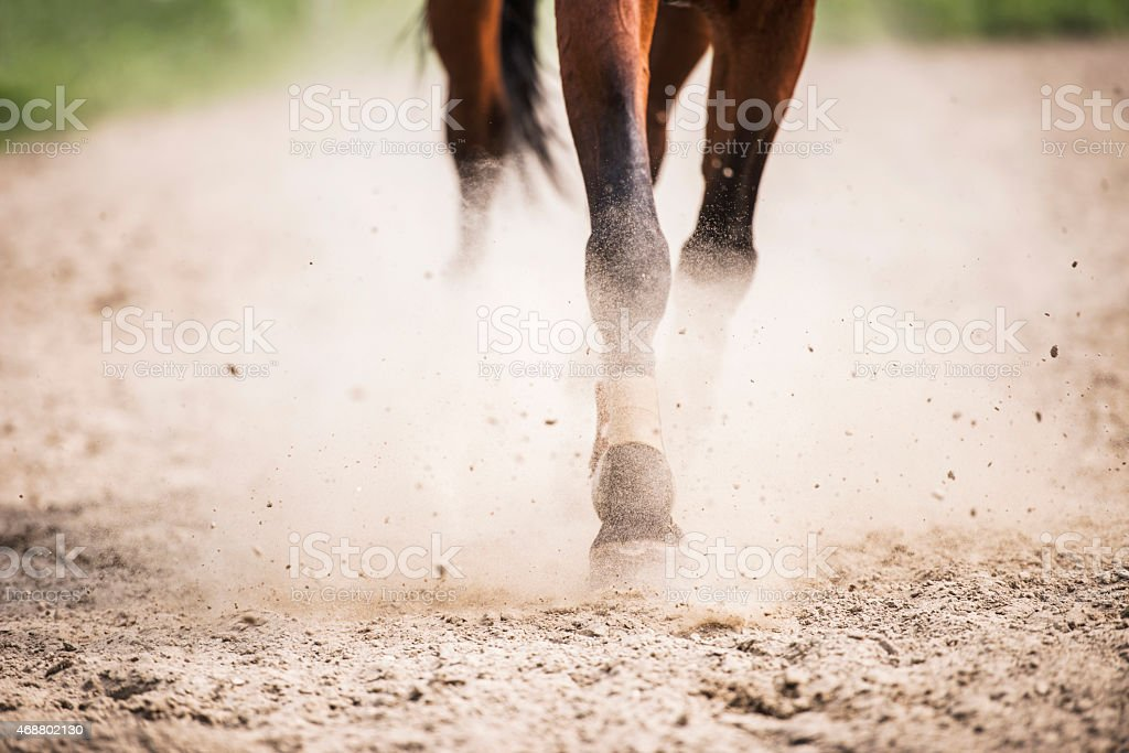 Horse legs galloping in dirt. stock photo