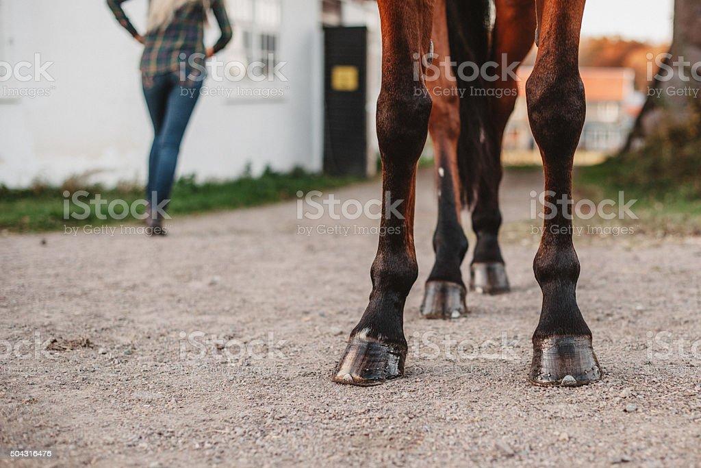 Horse legs hoofs stock photo