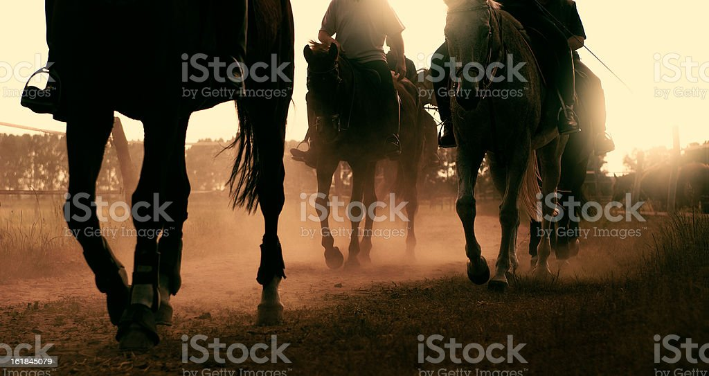 horse legs in backlight stock photo