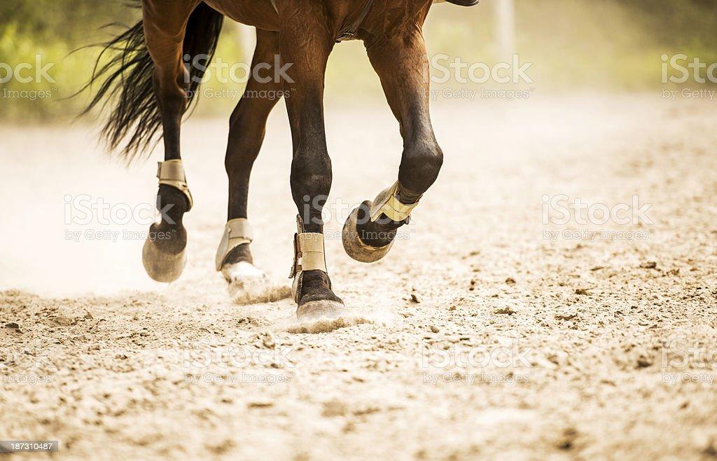 Horse legs. stock photo