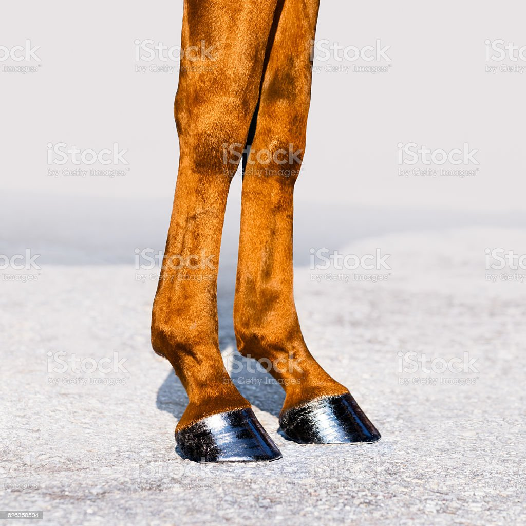 Horse legs with hooves close-up. Skin of chestnut horse. stock photo