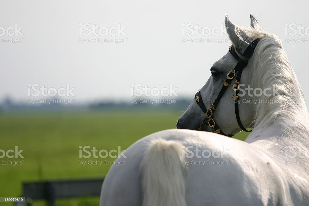 Horse looking away stock photo