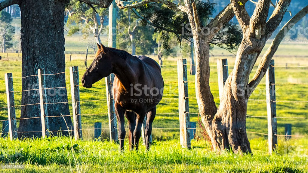 Horse Looking Interested stock photo