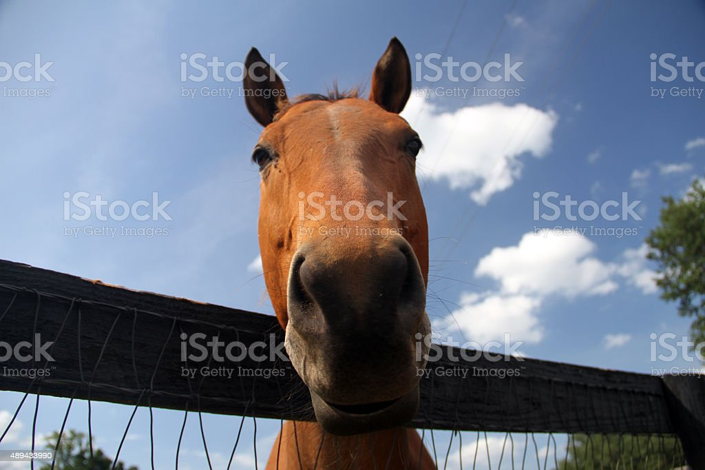 Horse looking into camera & funny look with blue sky stock photo