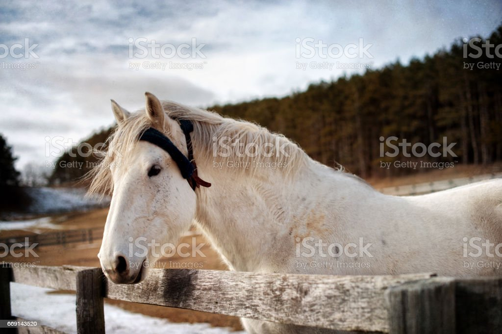 Horse looking over Fence stock photo