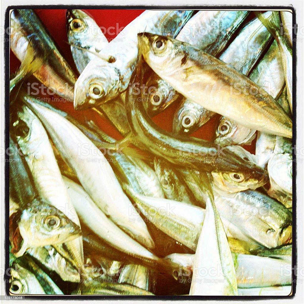 horse mackerel stock photo