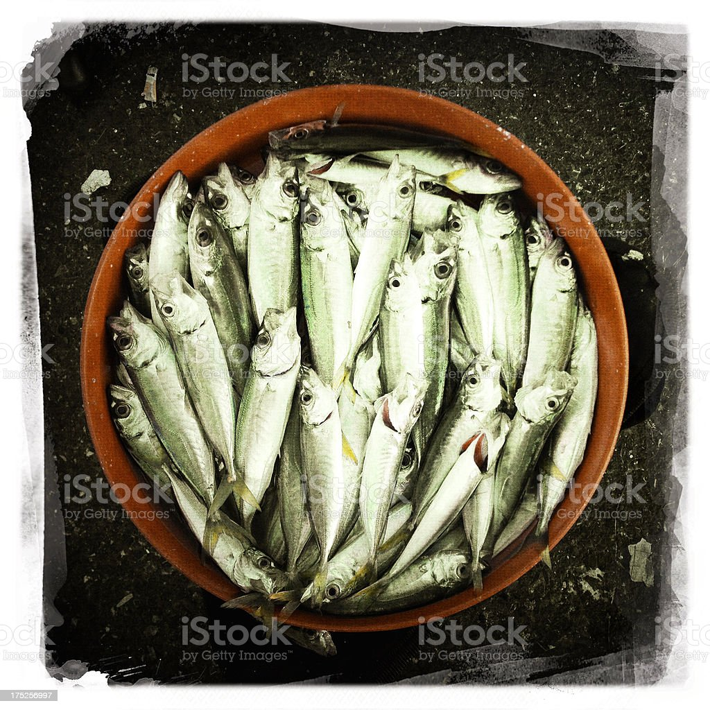 horse mackerel stock photo