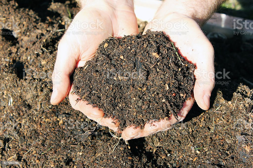 Horse Manure Compost stock photo