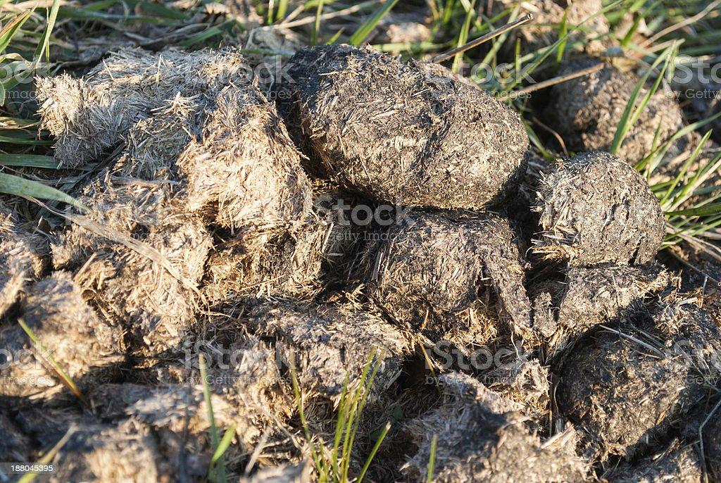 Horse manure stock photo