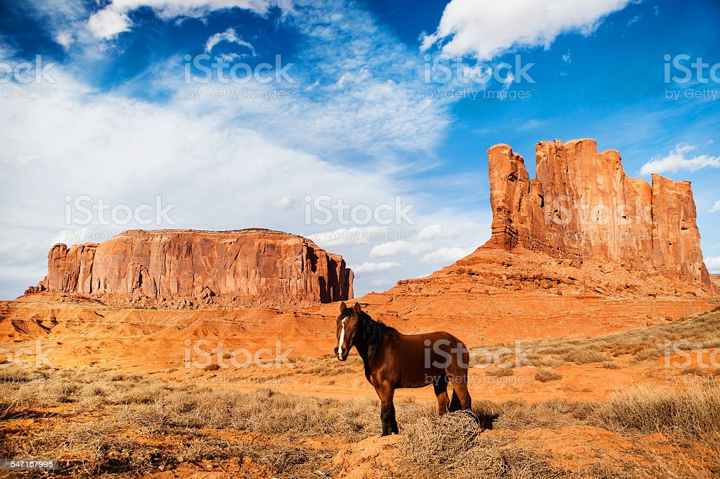 horse monument valley - unite states of america stock photo