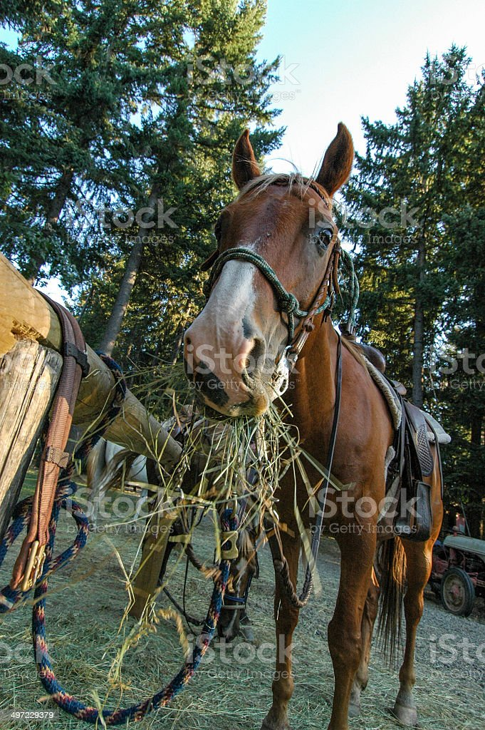 Horse Munch stock photo