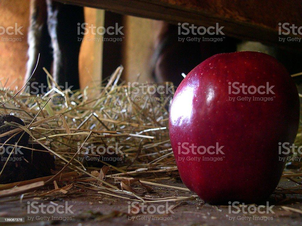 Horse N' Apple royalty-free stock photo