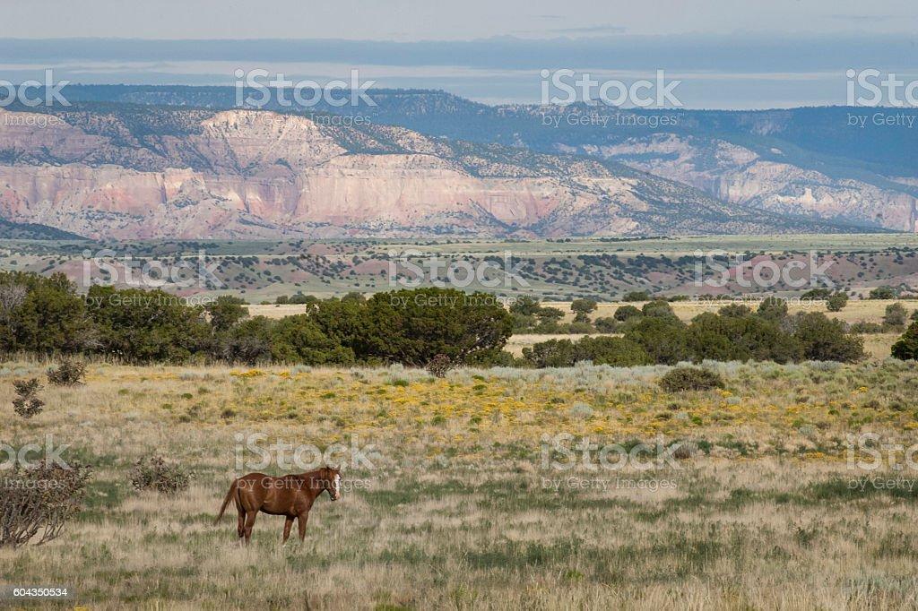 Horse Near Abiquiu New Mexico stock photo