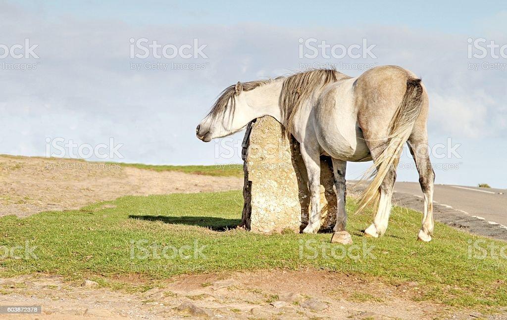 Horse near country road stock photo
