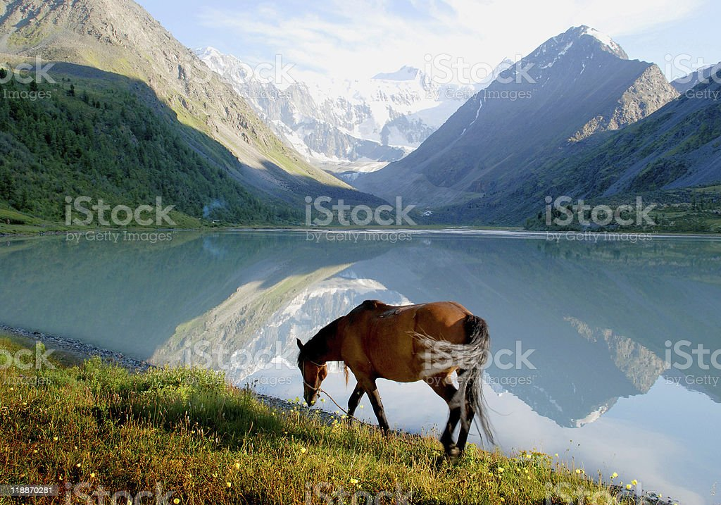 Horse near mountain lake Ak-kem, Altai, Russia, wild landscape stock photo