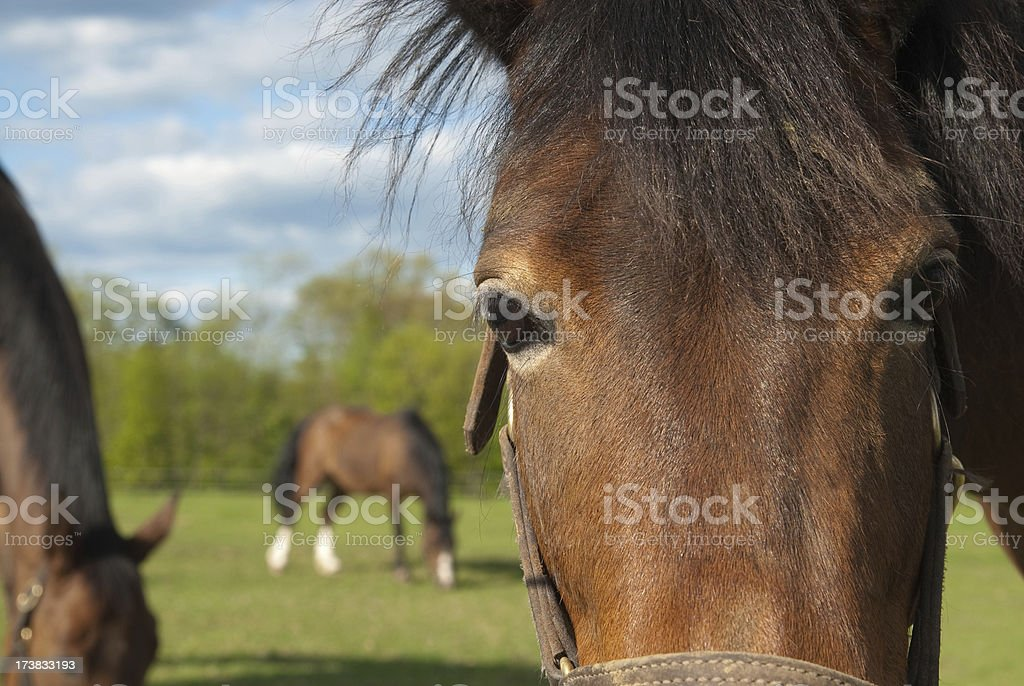 Horse Of Course stock photo