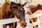 Horse on a farm behind a wooden fence.