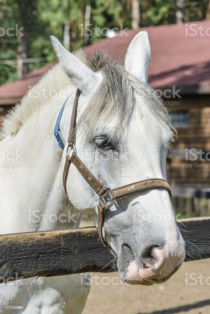 horse on a farm royalty-free stock photo