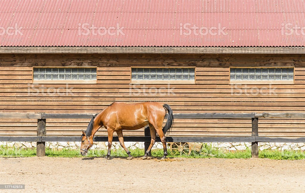 horse on a farm royalty-free stock photo