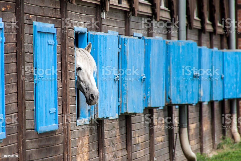 Horse in their stable stock photo