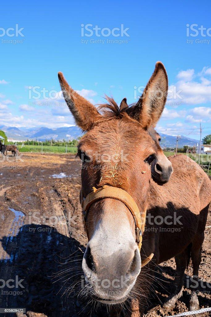 Horse on a farm stock photo