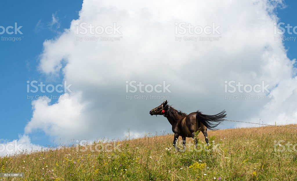 Horse on a leash in the green meadow stock photo