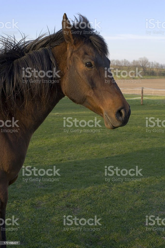 Horse on a pasture (no bridal) stock photo