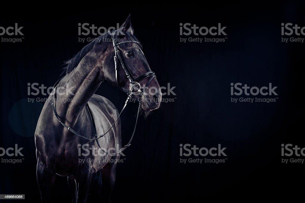 Horse on Black Background stock photo