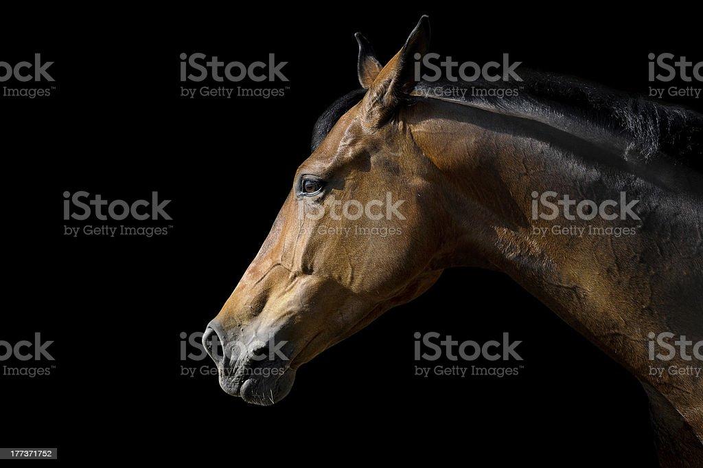 horse on black royalty-free stock photo