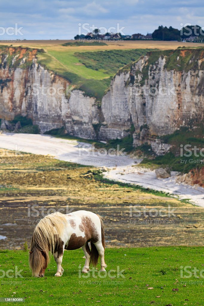 Horse on cliffs near Etretat and Fecamp, Normandy, France stock photo