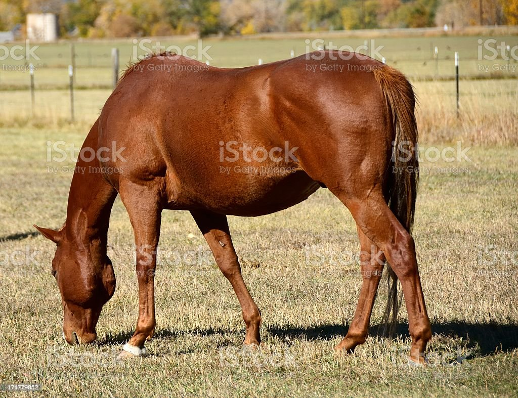 Horse on Colorado Ranch royalty-free stock photo