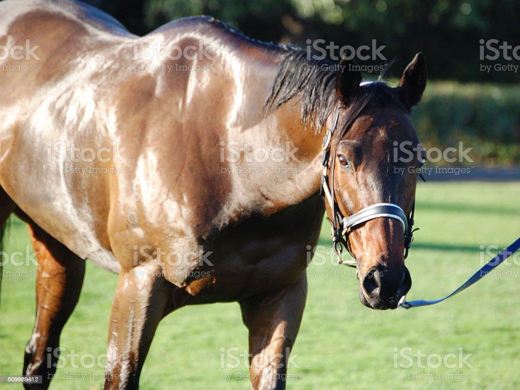 Horse on grass stock photo