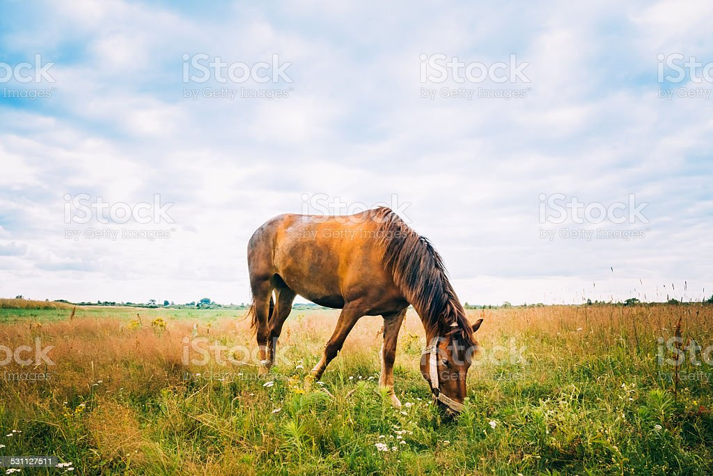 Horse On Green Grass stock photo