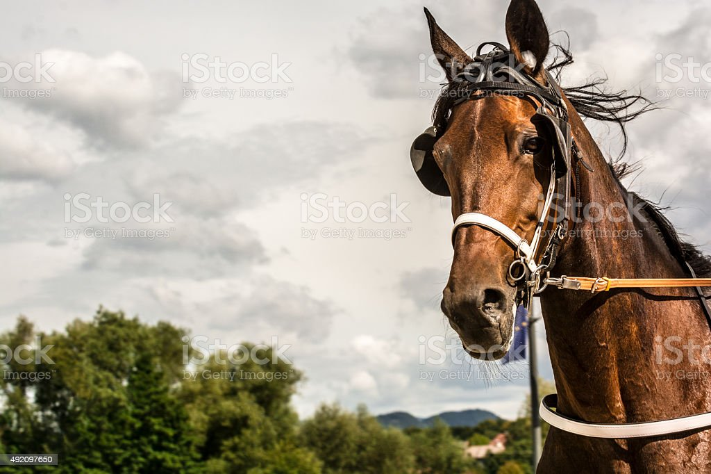 Horse on harness racing competition against cloudy sky stock photo
