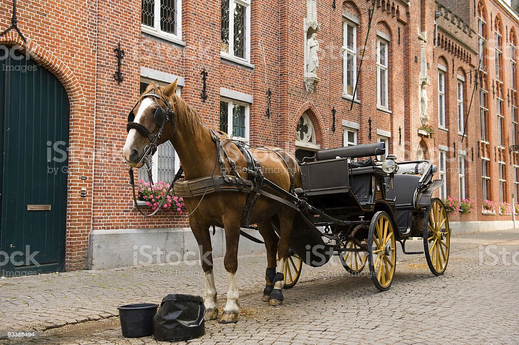 horse on her break royalty-free stock photo