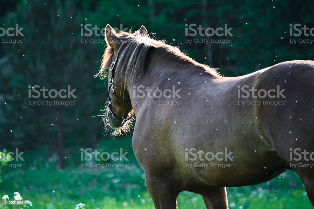 Horse on meadow stock photo