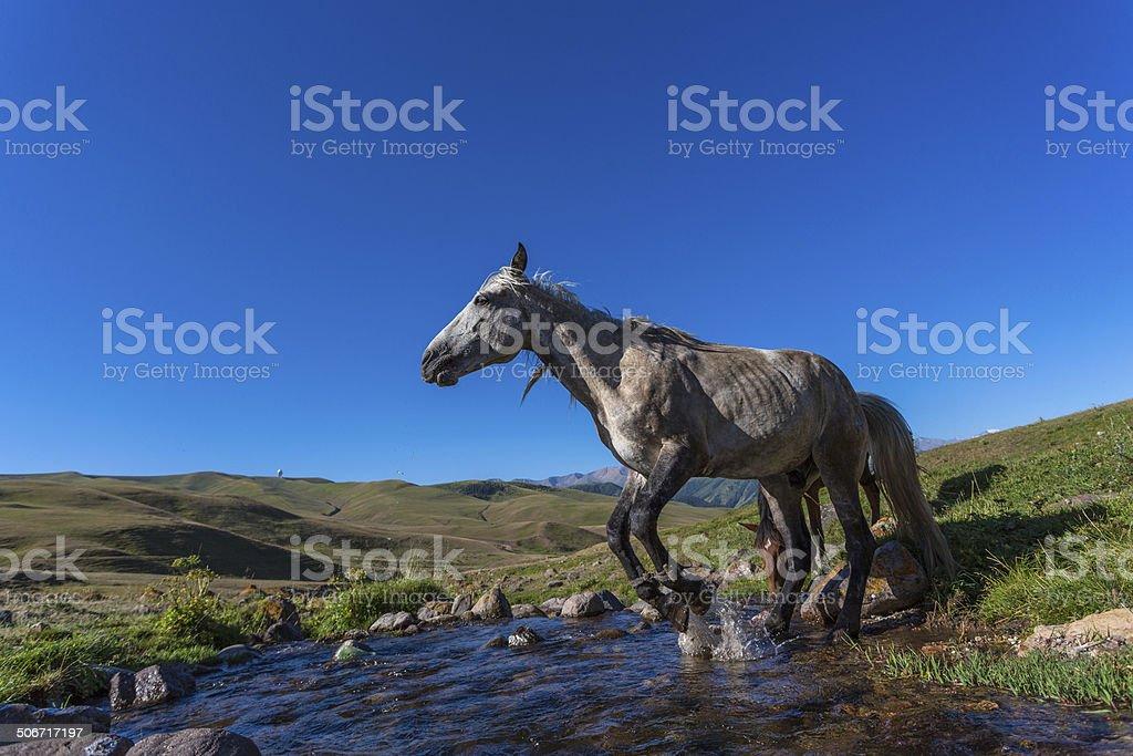 horse on mountain pasture stock photo