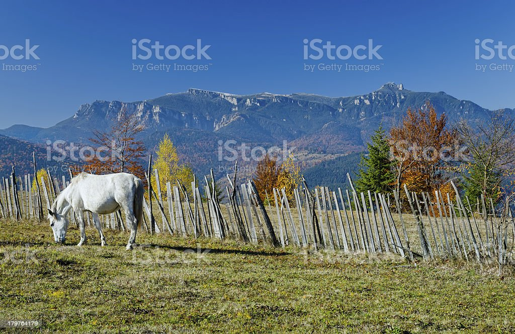 horse on mountain royalty-free stock photo
