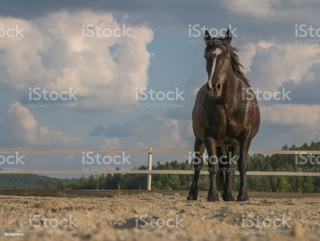 horse on sand with sky background stock photo