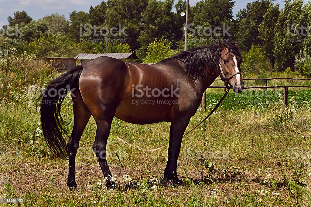 Horse on the field royalty-free stock photo