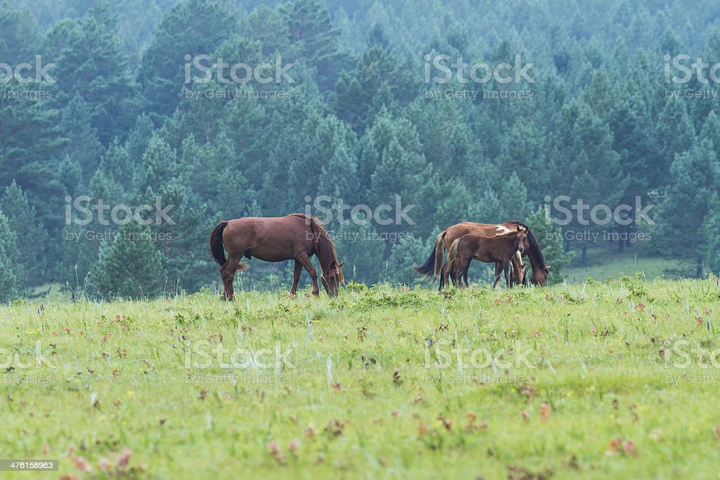 horse on the grassland royalty-free stock photo
