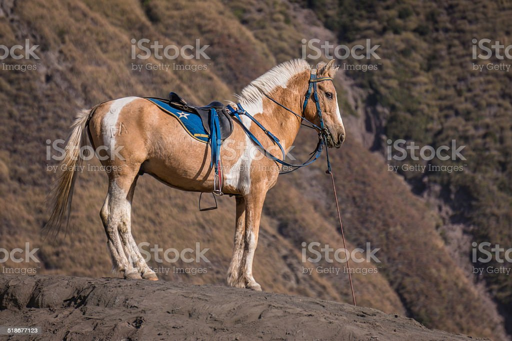 Horse on the Hill stock photo