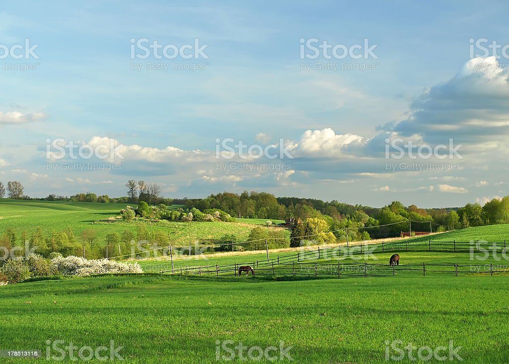 horse on the pasture royalty-free stock photo