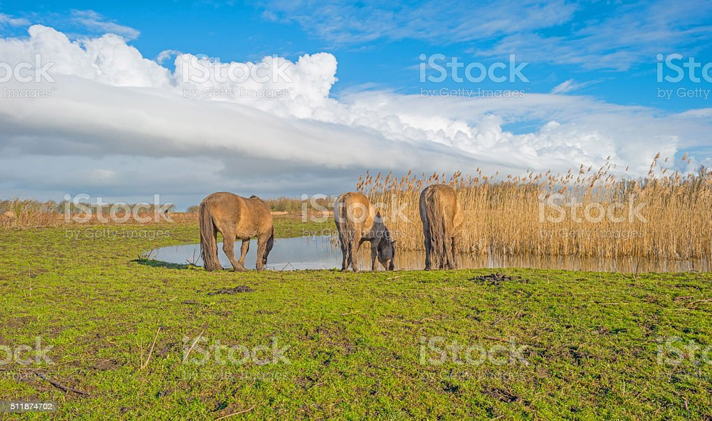Horse on the shore of a lake in winter stock photo