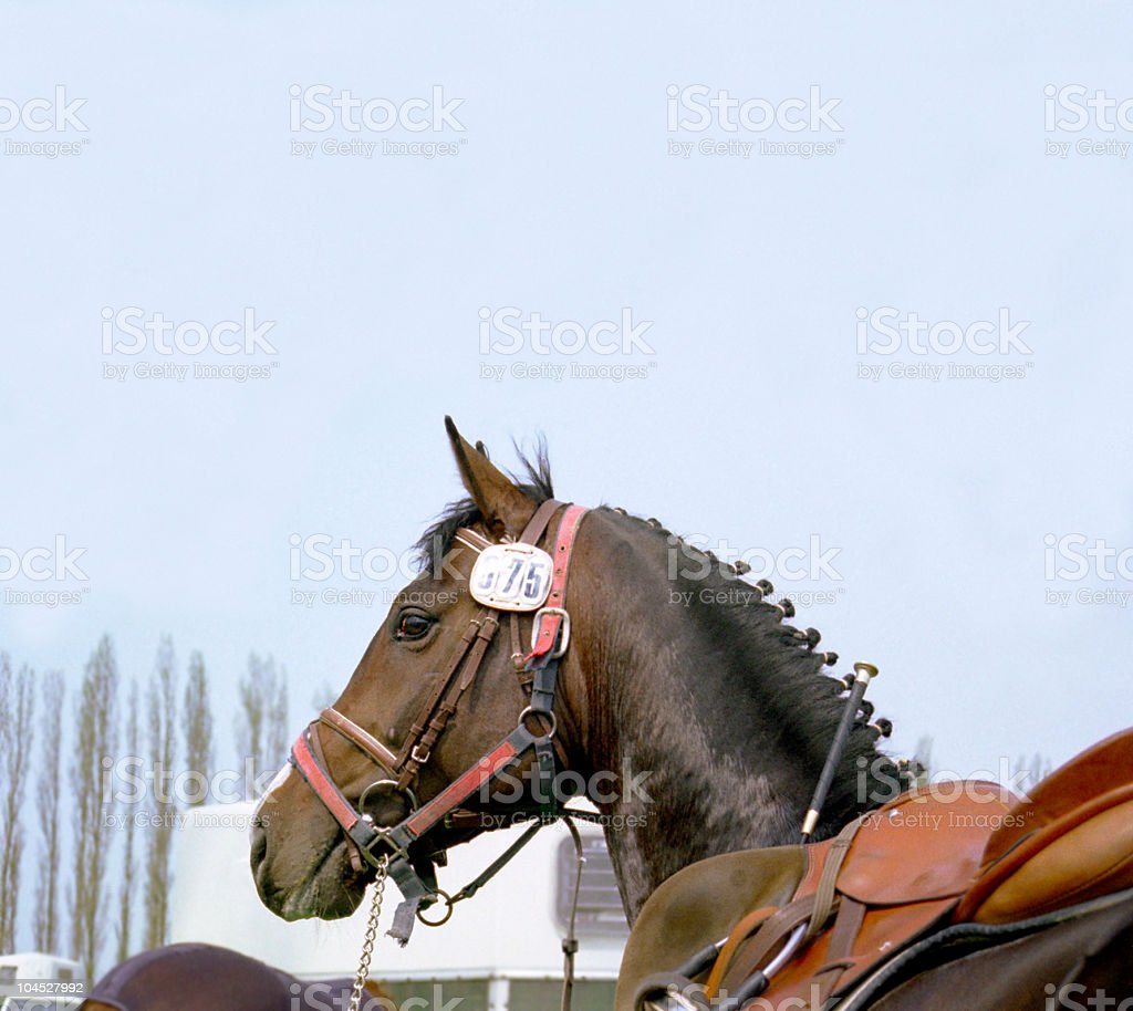 horse on tournament - portrait stock photo