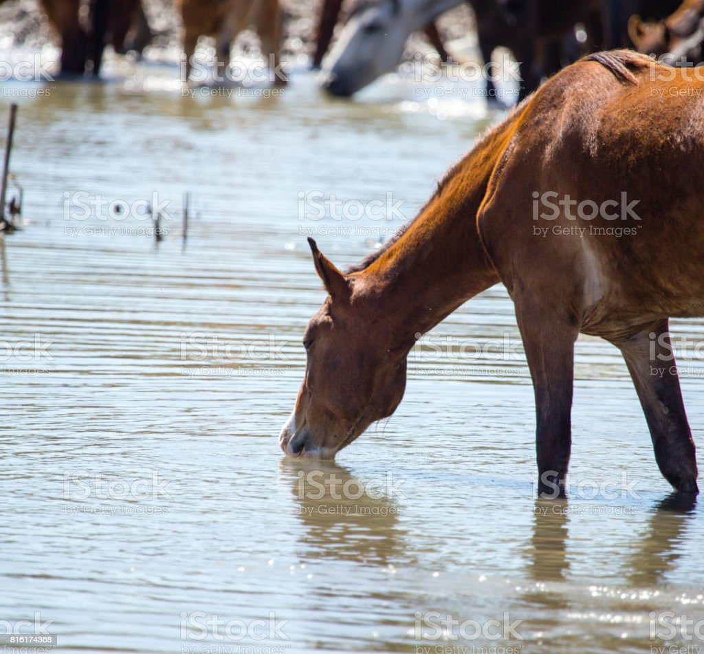 Horse on watering places on the lake stock photo