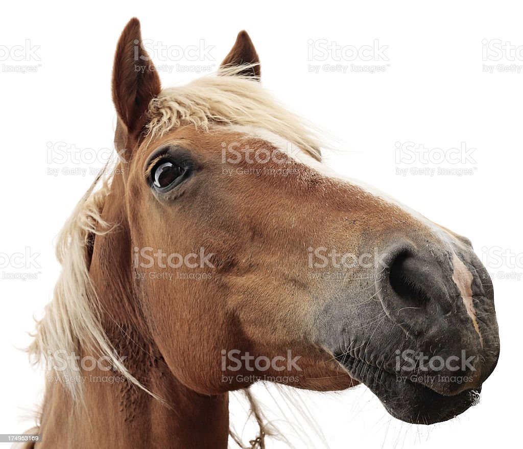 Horse on white background royalty-free stock photo